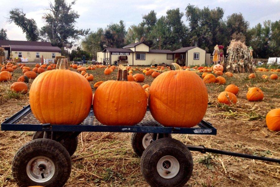 10.27_pumpkin-palooza