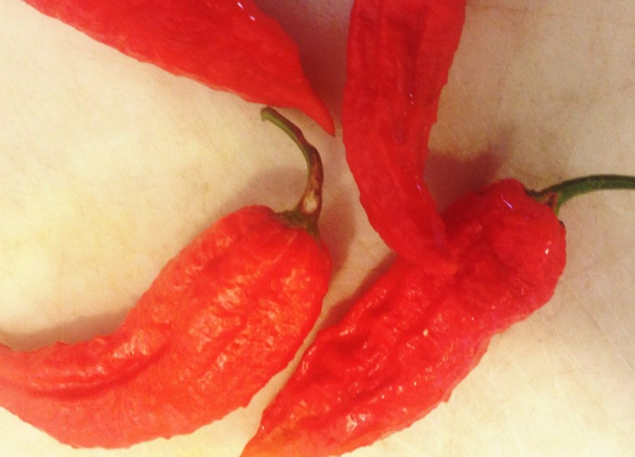 11.5_ghost-pepper1
