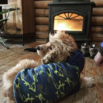 Napping around the fire