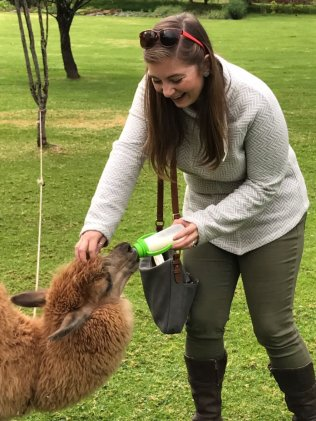 Making friends with llamas