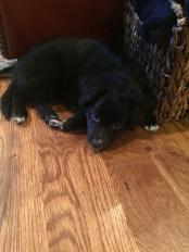 Puppy Rocky