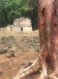 mexico - yaxchilan